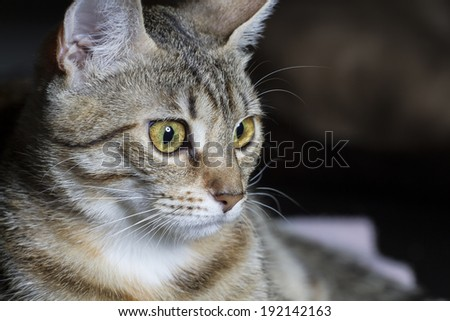 Curious, Adorable common cat hair tabby - stock photo
