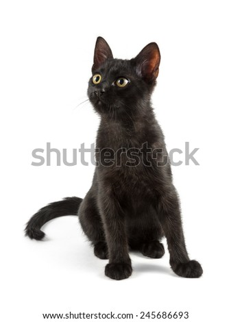curious black cat looking aside and up - stock photo