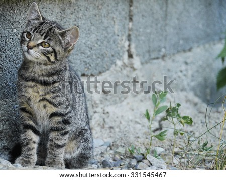 curious cat listening in frot of a grey wall - stock photo