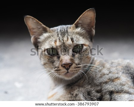 Curious cat stare at camera - stock photo