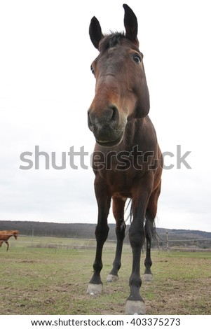 curious horse looking down - stock photo