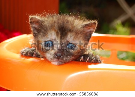 Curious kitten tries to exit the basket - stock photo