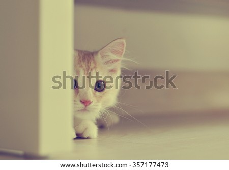 Curious looking cat half way peeking from behind door. Image is in vintage color effect and suitable for background purposes only. - stock photo