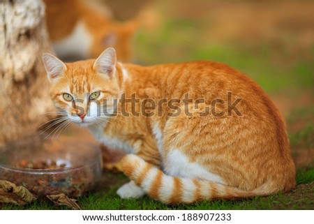 Curious orange cat looking at the camera - stock photo