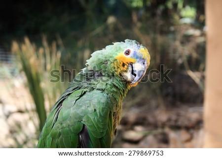 Curious parrot - stock photo
