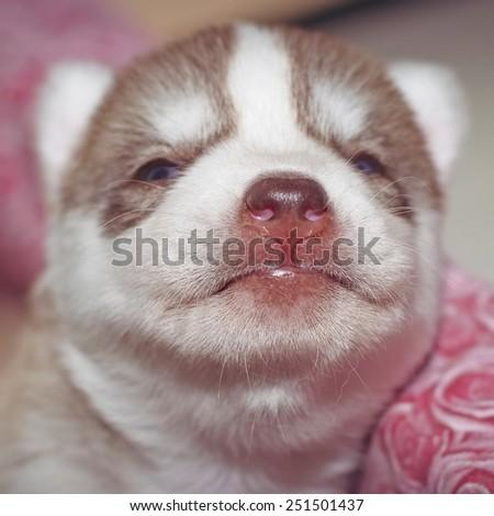 Curious puppy. Nose close up. - stock photo