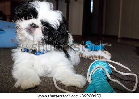 curious puppy with cute expression - stock photo