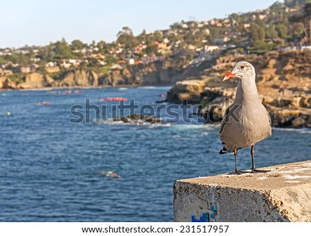 Curious seagull with orange beak looking at the cliffs and ocean at La Jolla Cove, San Diego, California. Blurred background of cliffs, trees, and homes.  - stock photo