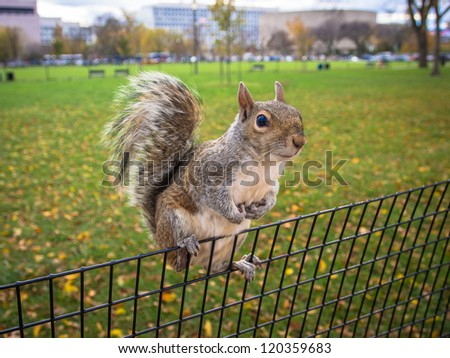 Curious squirrel hanging on park fence with big black eyes - stock photo