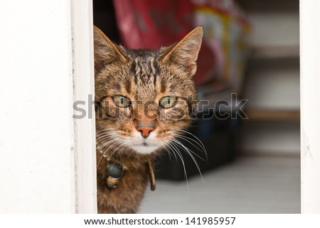 Curious tabby cat looking through open door. - stock photo