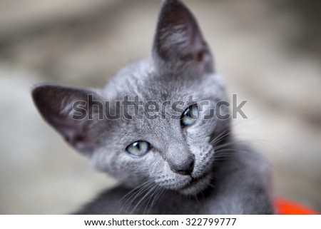 Curious wide eyed kitten staring at the camera with blurred background - stock photo