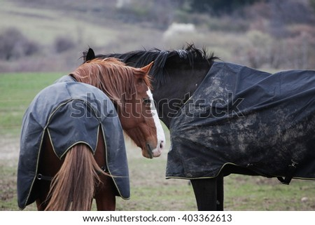 curiouse horse with rug - stock photo