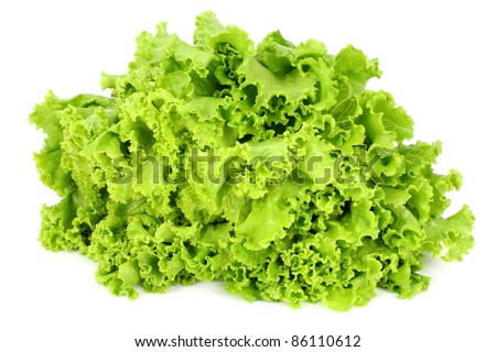 curly leaf lettuce - stock photo