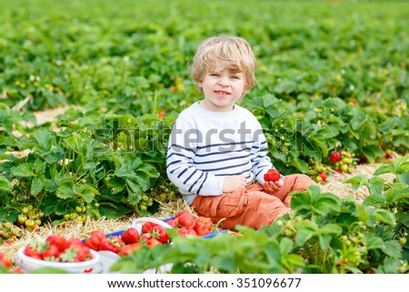 Curly little toddler kid boy picking and eating strawberries on organic pick a berry farm in summer, on warm sunny day. Harvest fields. Healthy food for children. Gardening and farming concept - stock photo