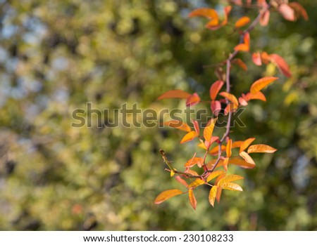curly tree branch fall - stock photo