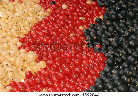 Currants, different colors, isolated on white - stock photo