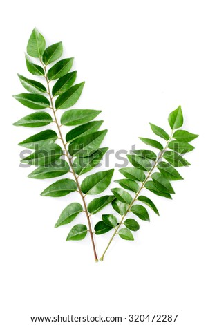 Curry leaves on white background - stock photo