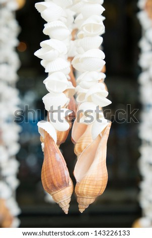Curtains made of Sea shells - stock photo