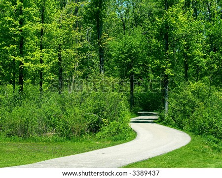 Curved pathway leads deep into the forest - stock photo