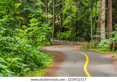 Curving Footpath through a Wood - stock photo