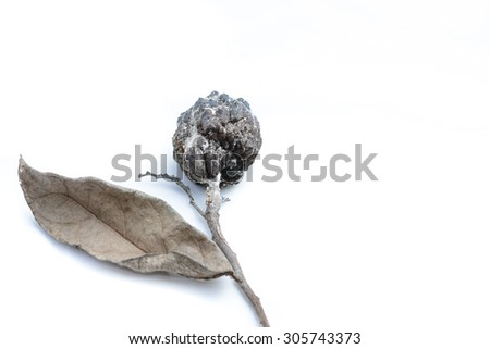 Custard apple rot and dry On a white  background - stock photo
