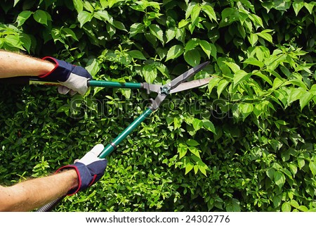 cut a hedge - stock photo