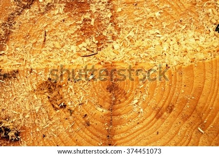 Cut alder tree with annual ring, saw dust and pieces of bark. Detail of fresh tree stump - stock photo