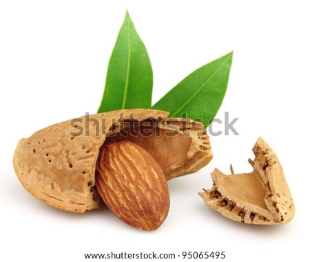 Cut almond with leaf - stock photo