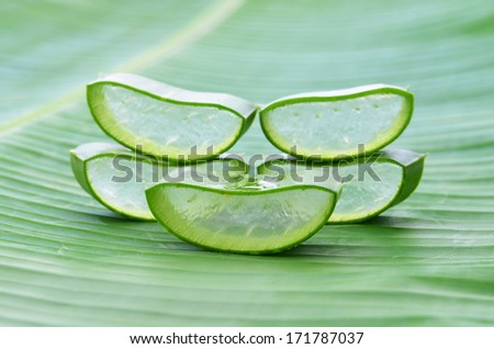 cut aloe leaves on banana leaves - stock photo