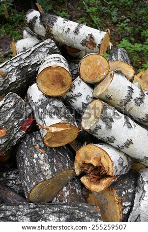 Cut birch wood logs stacked on a ground close-up - stock photo