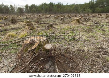 Cut down alder trees - stock photo
