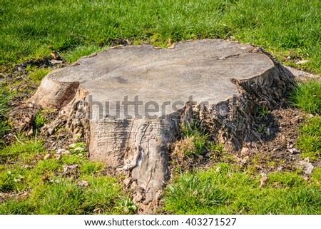 Cut down trees - stock photo