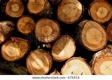 Cut Firewood - stock photo