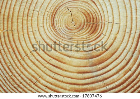 Cut log wood background texture. - stock photo