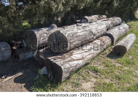 Cut logs in forest - stock photo