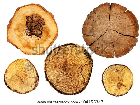 Cut of a log. Isolated over white - stock photo