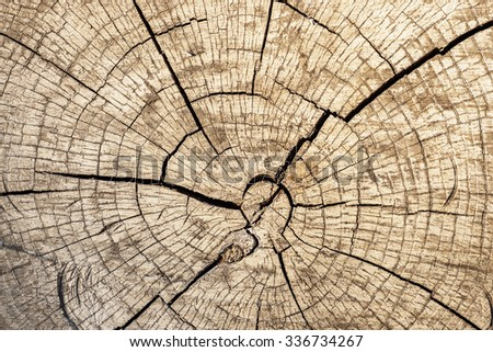 cut of log closeup with concentric rounds - stock photo