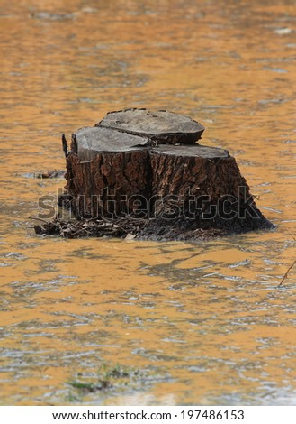 Cut tree - deforestation concept of a rainforest vanishing in Asia - stock photo