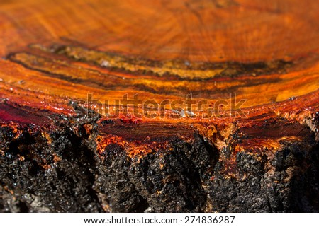 Cut tree stump or log showing the pattern of the tree rings and a rich red brown color and also the rough bark. - stock photo
