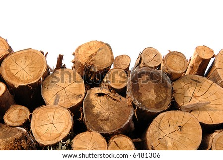 Cut trunks stacked in forest on white background - stock photo