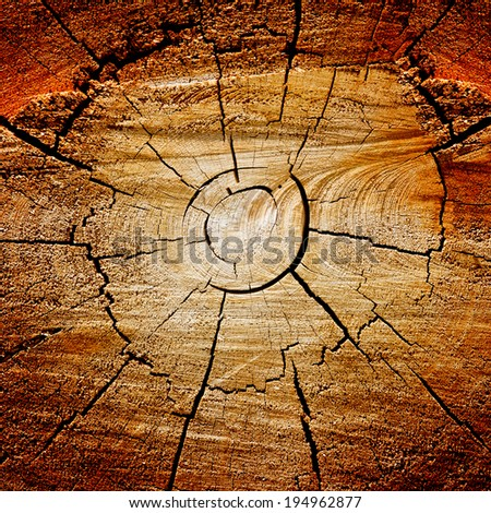 Cut wooden tree trunk dark organic background texture - stock photo
