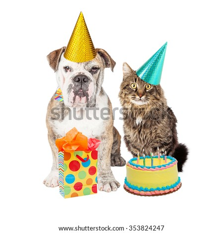 Cute adult Bulldog breed dog and tabby cat wearing birthday party hats with a cake and present - stock photo