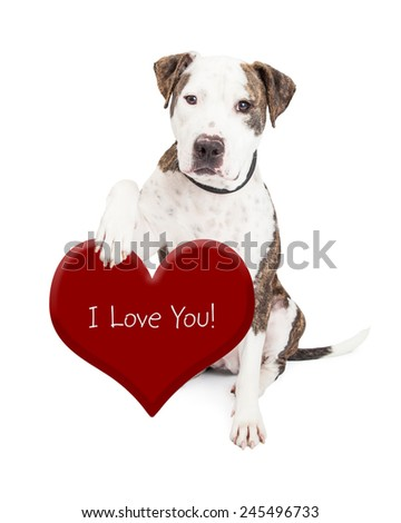 Cute and friendly Pit Bull Dog holding onto a red heart with the words I Love You - stock photo