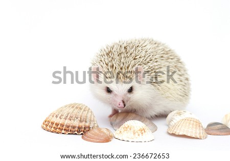 cute and fun hedgehog baby in background - stock photo