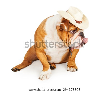 Cute and funny English Bulldog breed dog wearing a western cowboy hat looking to the side and sticking his tongue out - stock photo