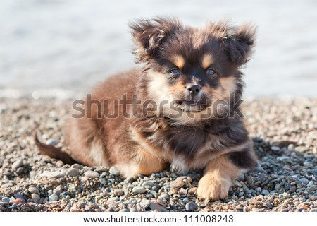Cute and lonely puppy clever looking on the people - stock photo