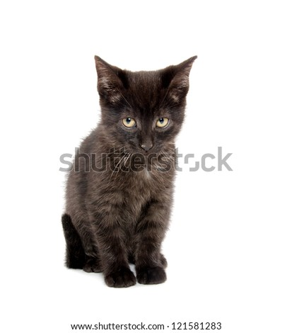 Cute baby black cat playing on white background - stock photo