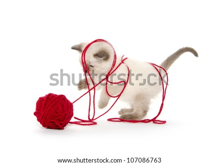 Cute baby cat playing with red ball of yarn on white background - stock photo