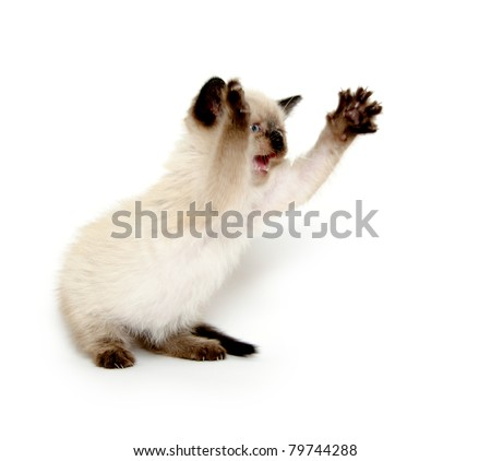Cute baby cat with paw up playing on white background - stock photo
