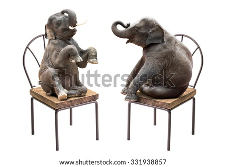 Cute baby elephant sitting on the chair isolated on white background - stock photo